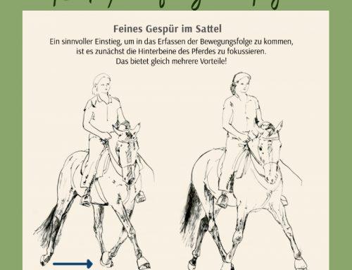8. Im Fokus der Wahrnehmung: Die Hinterhand des Pferdes