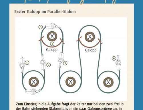 Finetuning: Sitzschulung – Übergänge im Parallel-Slalom